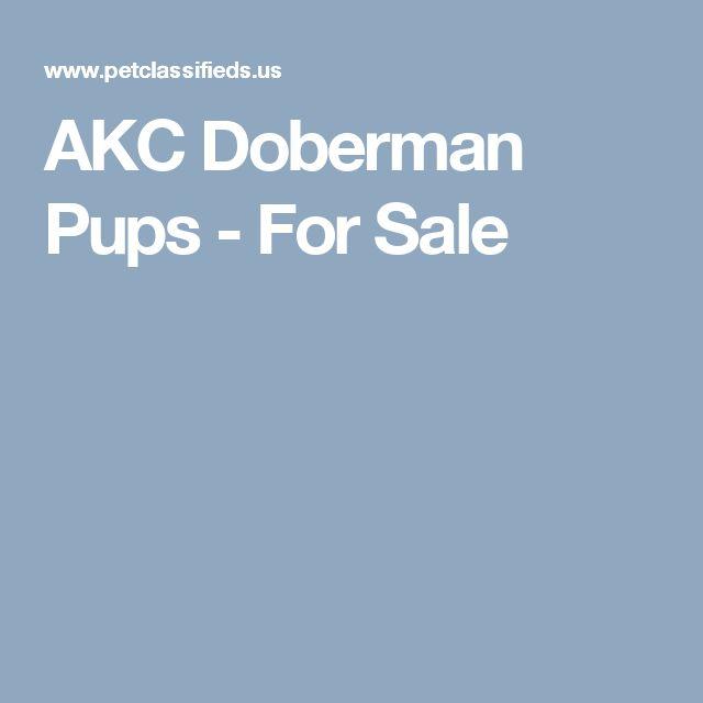 AKC Doberman Pups - For Sale