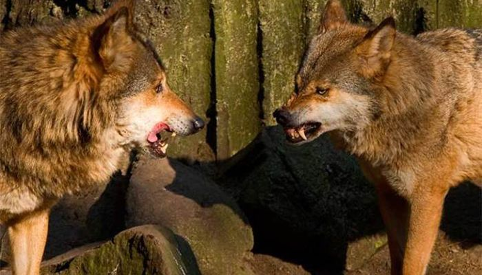 Притча про двух волков! Вы прочитаете это за 20 секунд, но будете помнить вечно!