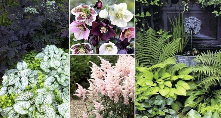 Har du tråkiga och oinspirerande delar av trädgården i skugga? Misströsta inte! Några av de vackraste perennerna trivs i skuggiga lägen. Börja se möjligheterna med en skuggig plats.