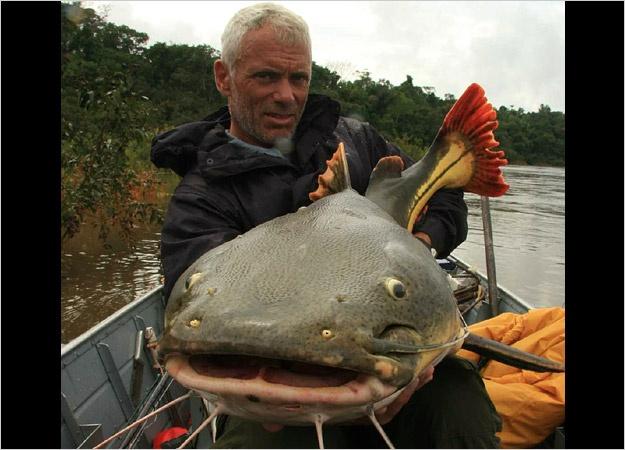 piraiba catfish eats man wwwpixsharkcom images