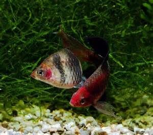 46 best fish raised in florida fish farm ponds images on for Florida tropical fish farms