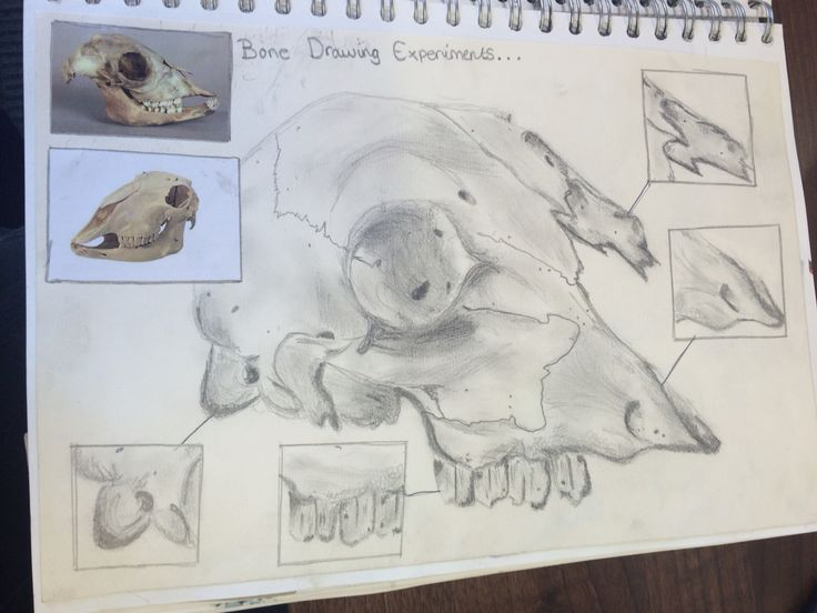 Skull (bone structure) experiment