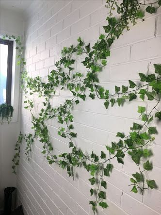 Image result for indoor ivy plant