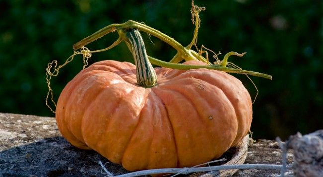 ● Arrachez les légumes qui ne donnent plus.● Griffez la terre mise à nu après nettoyage.● Semez des salades (chicorées) et autres plantes à salades (cresson de terre...) pour l'hiver.● Protégez les choux contre les piérides.● Récoltez les légumes racine (carottes, navets, panais…).