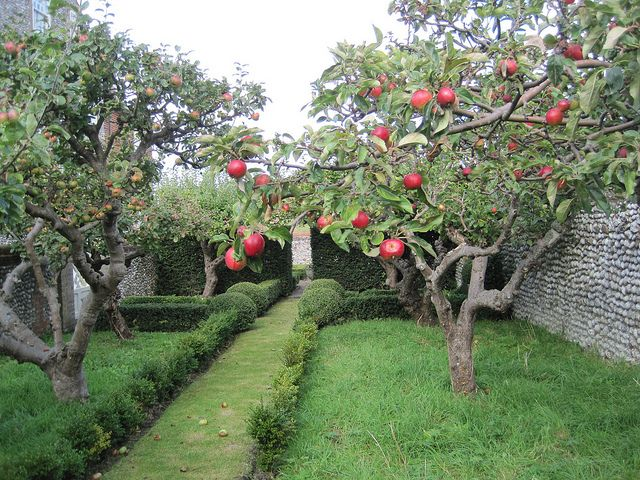 Love those flinty walls.......Apple orchard, Cley, Norfolk