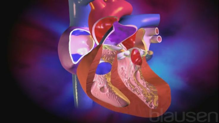Wanneer bij de geboorte een of meer afwijkingen aan de hartstructuur worden gevonden, spreekt men van een congenitale (aangeboren) hartafwijking. Ongeveer 8 van de 1000 baby's worden geboren met een een of andere vorm van hartafwijking. Wanneer je vroeger met een hartafwijking werd geboren, betekende dit dat je niet lang te leven had, maar door de medische vooruitgang is er in zulke gevallen nu kans op een langere levensverwachting.  Twee van de bekendste congenitale afwijkingen zijn…