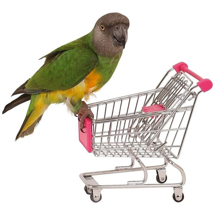 Shopping Caddie - Jouet Perroquet