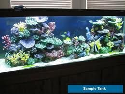 How to Set up Your Saltwater Fish Tank: Costs and How-To