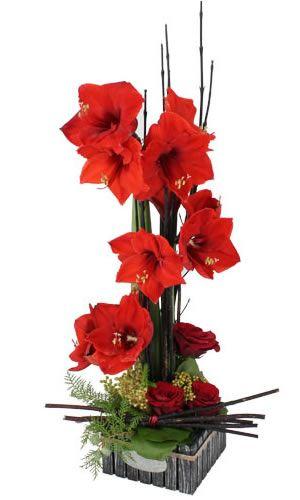 Les 25 meilleures id es de la cat gorie fleurs g antes sur for Les amaryllis fleurs