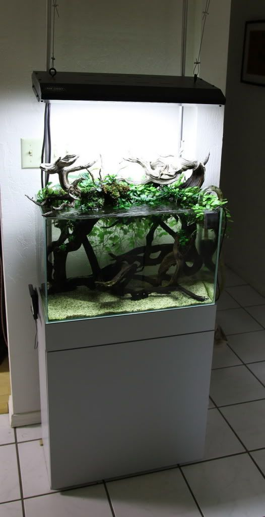 Tom Barr's emergent aquascape - this seems like an ideal tank for some of the freshwater ...
