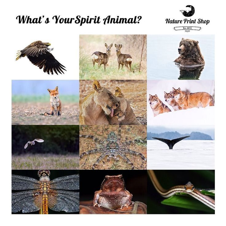 Christmas gift idea What's your spirit animal? This Christmas present a loved one with their spirit animal to keep for always. Over the week we will highlight spirit animals with its characteristics significance. Could your loved one be one of them?  http://ift.tt/2fj8QFW  #timplowdenphotography #wildlife #wildlifephotography #animallovers #Lion #Wolf #Bear #Deer #Snake #Frog #Spider #Eagle #Whale #Owl #Fox #Dragonfly #giftidea #print #gift #nature #natureprint #animals #etsy #shop