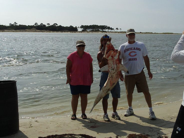 Shark fishing in indian pass with captain joey i love for Cape san blas fishing