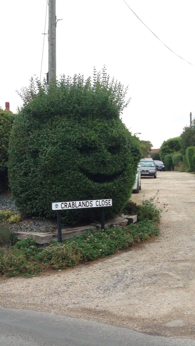 Created by me!Top topiary ,Selsey , West Sussex