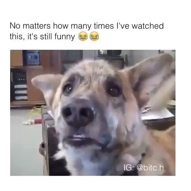 Jemand gibt ihm einen Scooby-Snack   – Dog stuff
