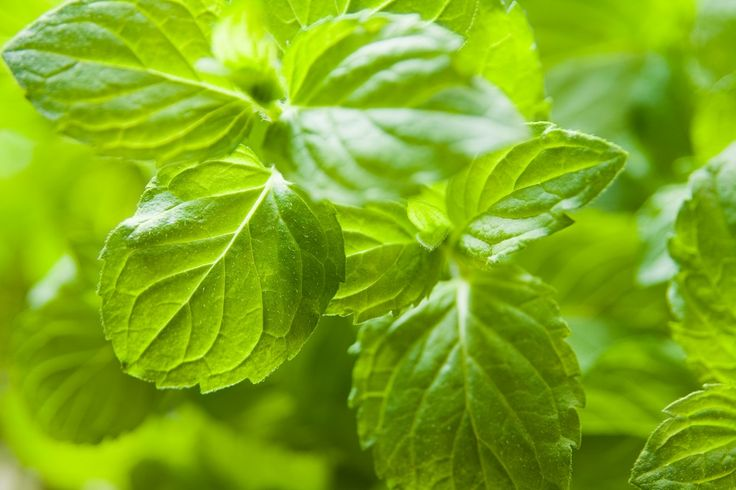 Enjoy a wide range of herbs at Powerscourt Garden Centre. Get expert advice on how to grow herbs such as mint, thyme and basil from our horticulturalists.
