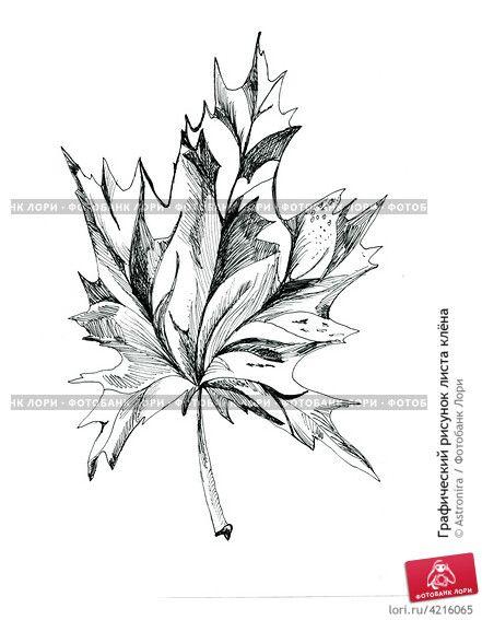 Графический рисунок листа клёна © Astronira / Фотобанк Лори