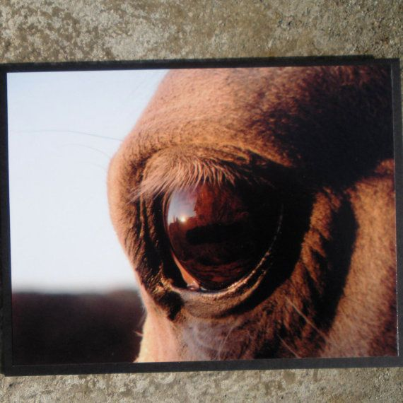 Horse Eye Close Up Picture Card by CardstockEquine on Etsy, $3.25