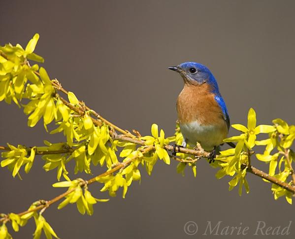 15 Best Colourful Birds Images On Pinterest