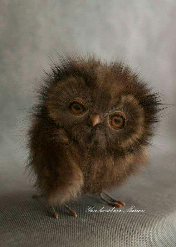 what a precious little owl!