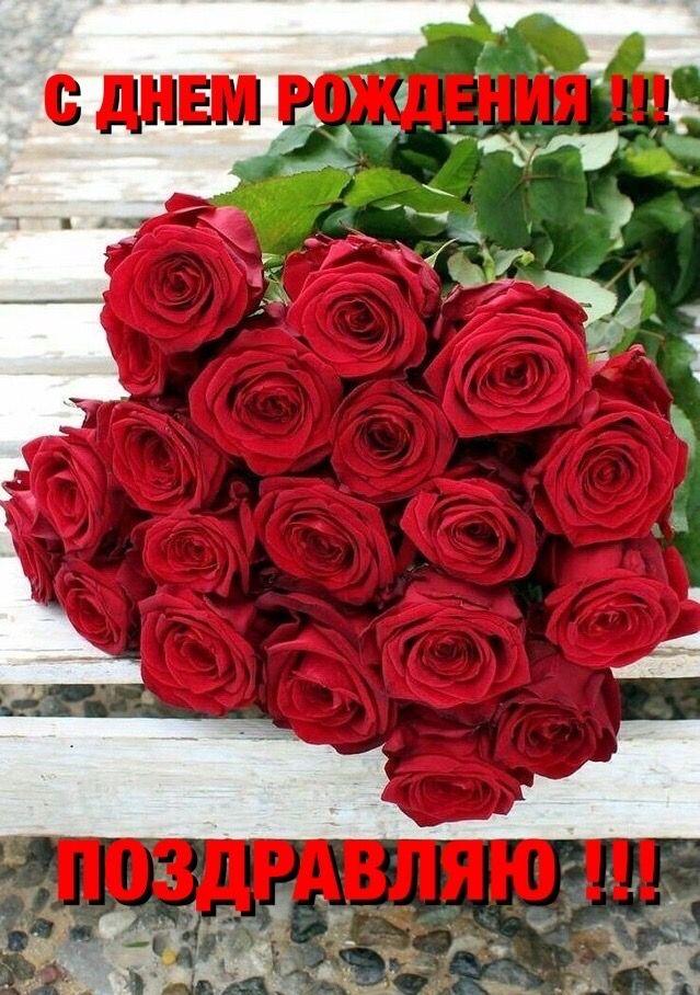 Pin By Sniega Mart On S Dnem Rozhdeniya Flowers Plants Rose
