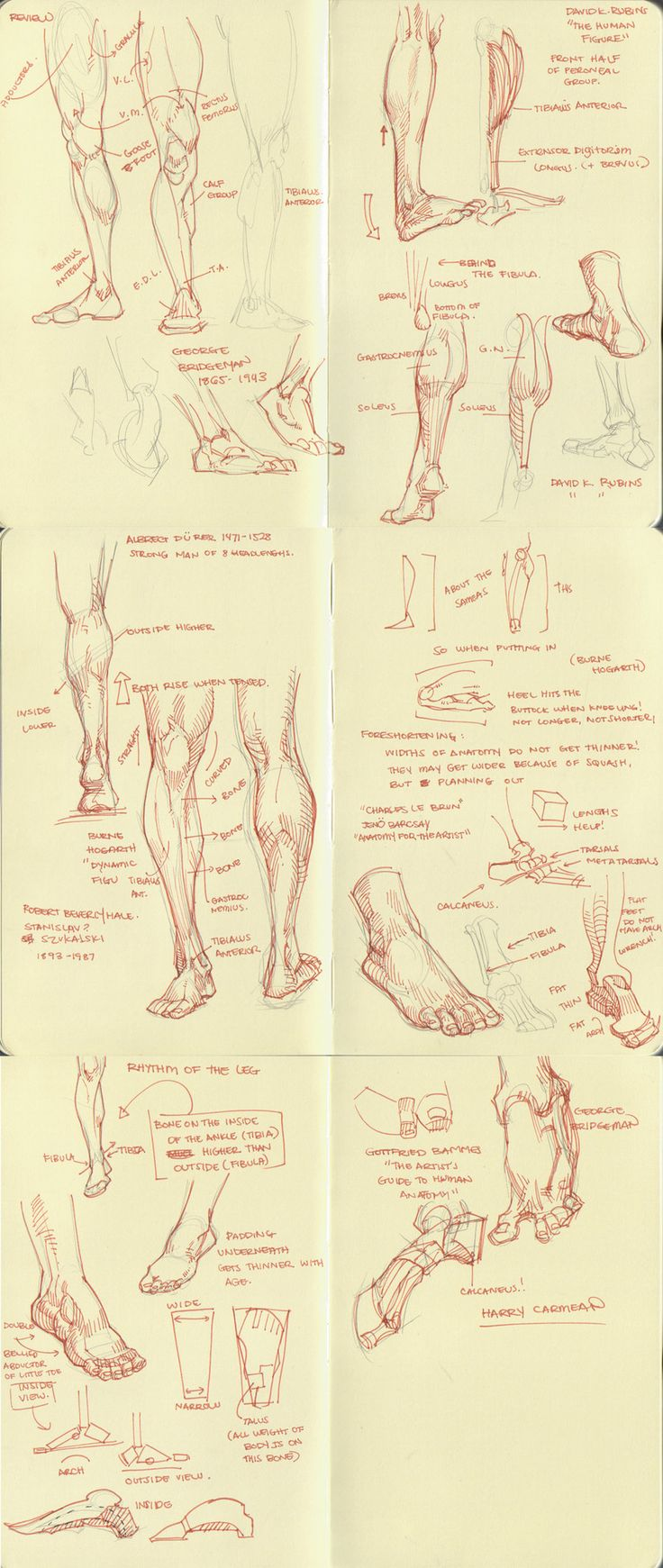 anatomy dump 2 by kakimari on deviantART ★    CHARACTER DESIGN REFERENCES   キャラクターデザイン • Find more artworks at https://www.facebook.com/CharacterDesignReferences & http://www.pinterest.com/characterdesigh and learn how to draw: #concept #art #animation #anime #comics    ★