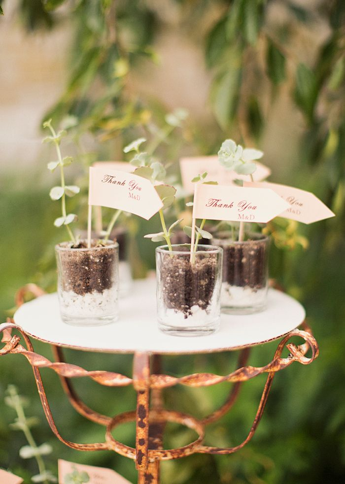 best bridal shower gifts for guests%0A potted bridal shower favors