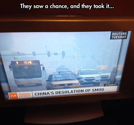 They saw a chance // funny pictures - funny photos - funny
