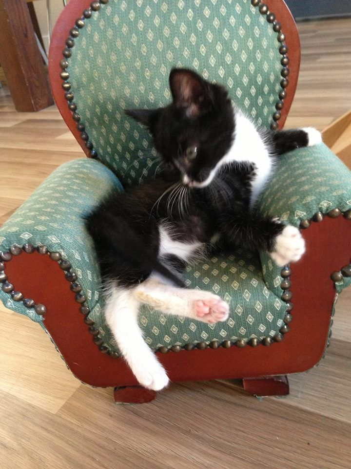 Adorable kitty chair!