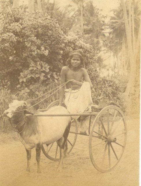 Small Ox Cart Colombo Ceylon Sri Lanka c1880