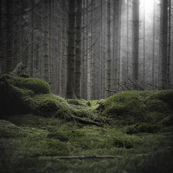 Wald by Jürgen Heckel