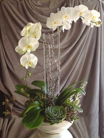 I love orchids with succulents.  Mix of tropical and desert in one place.