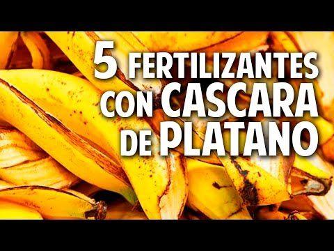 5 fertilizantes con cáscara de plátano | Plantas