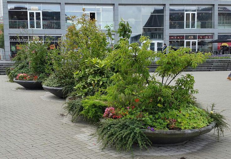 Bloembakken met groenen planten, Rotterdam