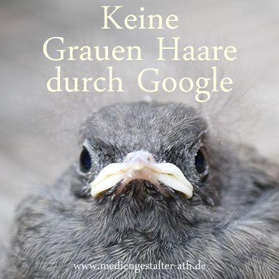 SEO Vogel #Gera #Thüringen