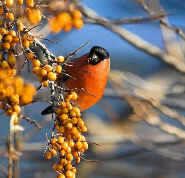 Jakie rośliny zwabią ptaki do ogrodu?