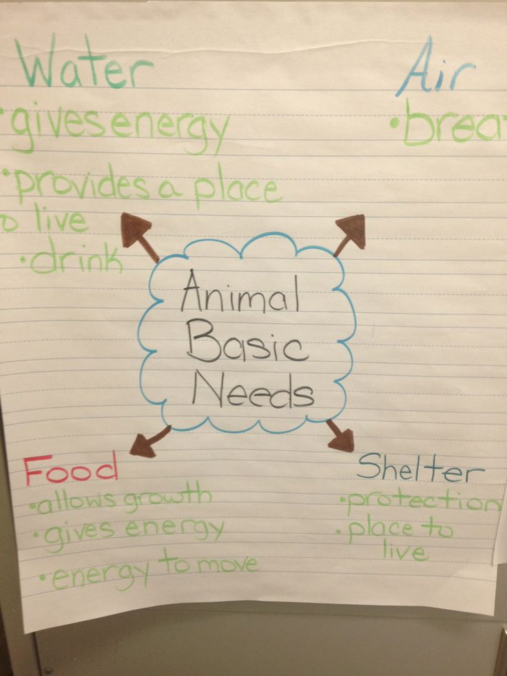 Basic Needs Of Animals Worksheets : Animal basic needs anchor charts pinterest animals