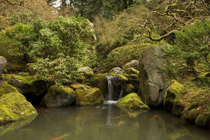 316 best koi pond images on pinterest koi ponds water for Koi pond screensaver