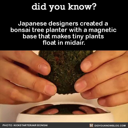 Japanese designers created a bonsai tree planter with a magnetic base that makes tiny plants float in midair.  Source