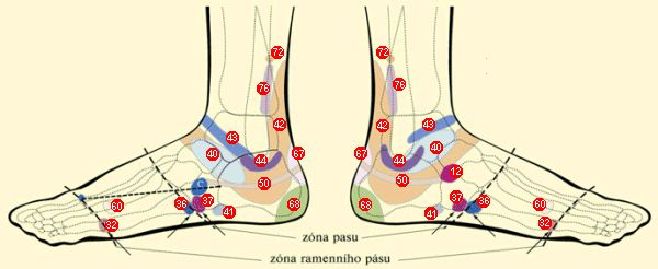 Reflexné zóny chodidiel :: BOTY J HANÁK R, s.r.o.