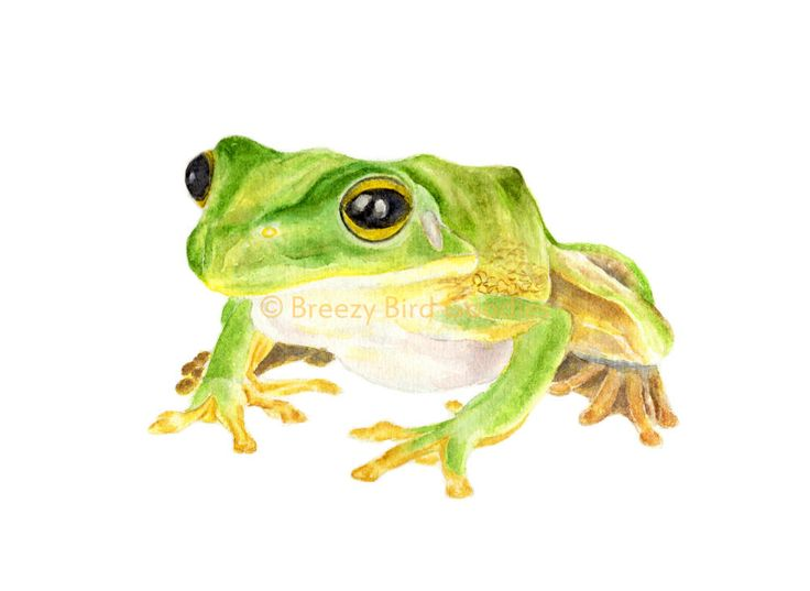 Frog Print, Frog Gifts, Watercolor Frog, Green Wall Art, Frog Portrait, Anura Print, Nursery Decor, Nursery Prints, Nursery Wall Art by BreezyBirdGoodies on Etsy