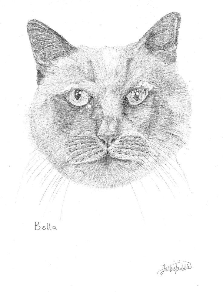 Bella, commissioned Black Cat