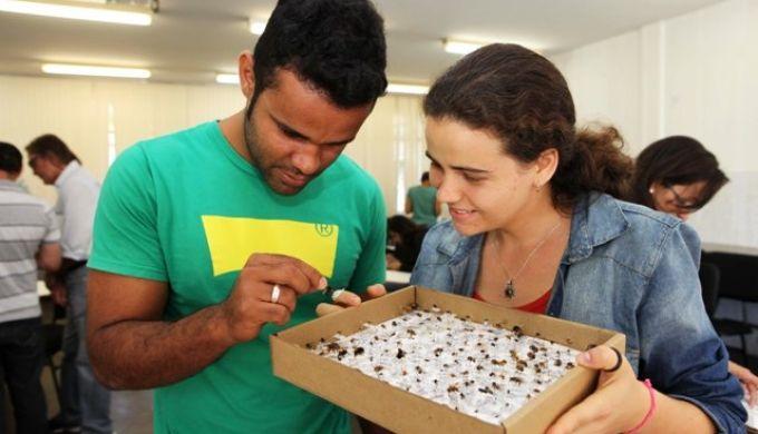 Técnicos da EBDA são capacitados para identificar e reconhecer espécies de abelhas | EBDA