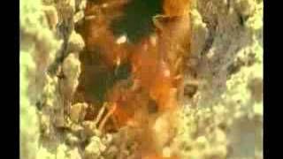Yusuf Yahya - YouTube