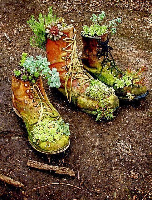 #OGTea cool #Gardening Tip