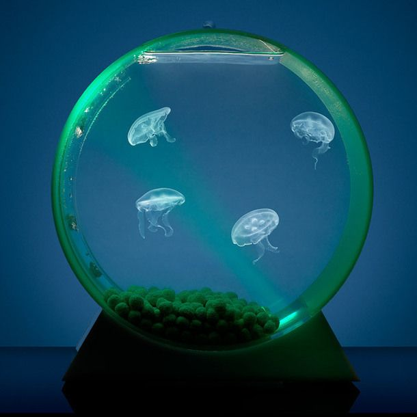 Jellyfish Tank with 3 Moon Jelly Fish - great gift idea for the marine enthusiasts and aquarium lovers.  The fish glow with the changing colors of the tank's LED light.