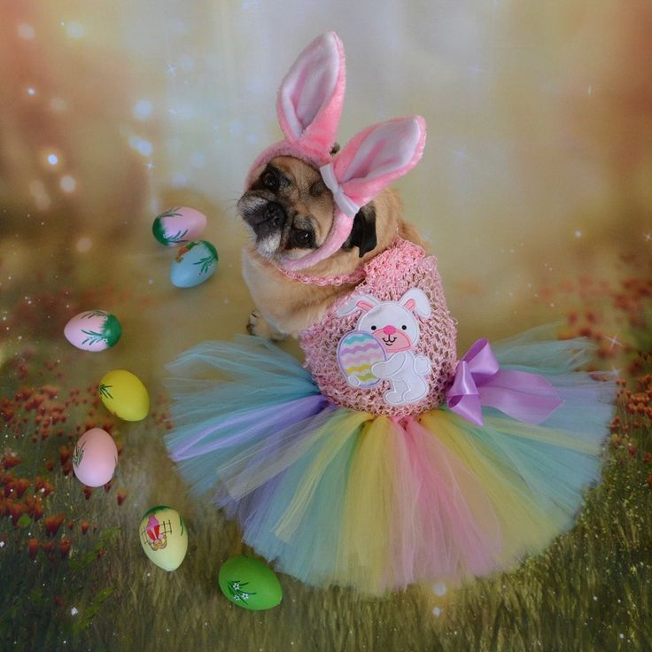 Pug Easter Bunny Beauty #pug #dog #Easter #bunny #rabbit #costume #ears #eggs #pets #cute