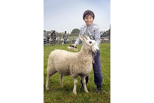 A lad with his sheep at the Camelford Show, Cornwall