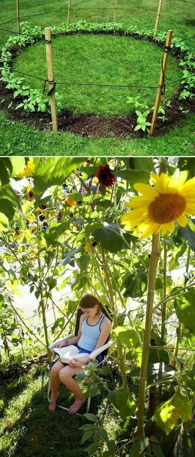 Grow a sunflower house for the kids to play in. // 31 Cheap And Easy Backyard Ideas That Are Borderline Genius  Backyards