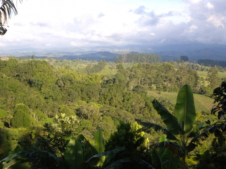 Alas y Raices, Popayan - Colombia  Organic Coffee Farm with Home Stays