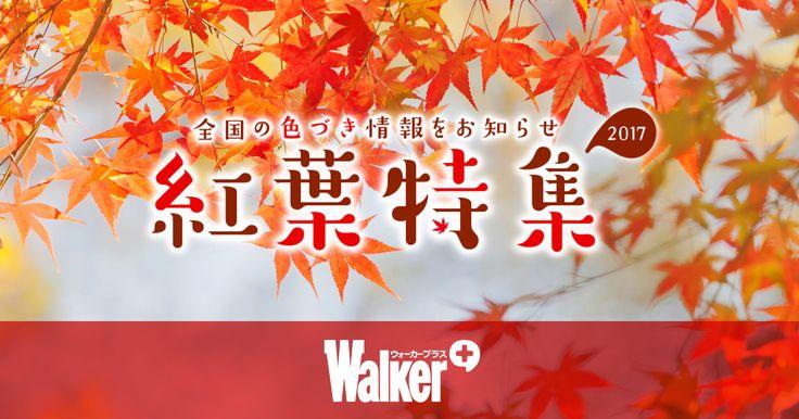 【東京都の紅葉情報】「紅葉名所2017」では全国約750カ所の紅葉情報を掲載。京都、日光、箱根、鎌倉などの人気紅葉名所はもちろん、色づき・見頃情報を毎日更新。ライトアップ、紅葉スポット人気ランキング、周辺の温泉情報も見逃せない!